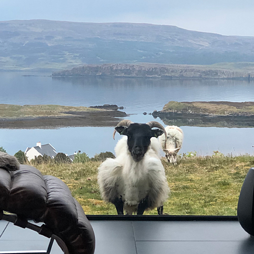 https://colbostcottages.com/wp-content/uploads/2019/09/sheep-square.jpg